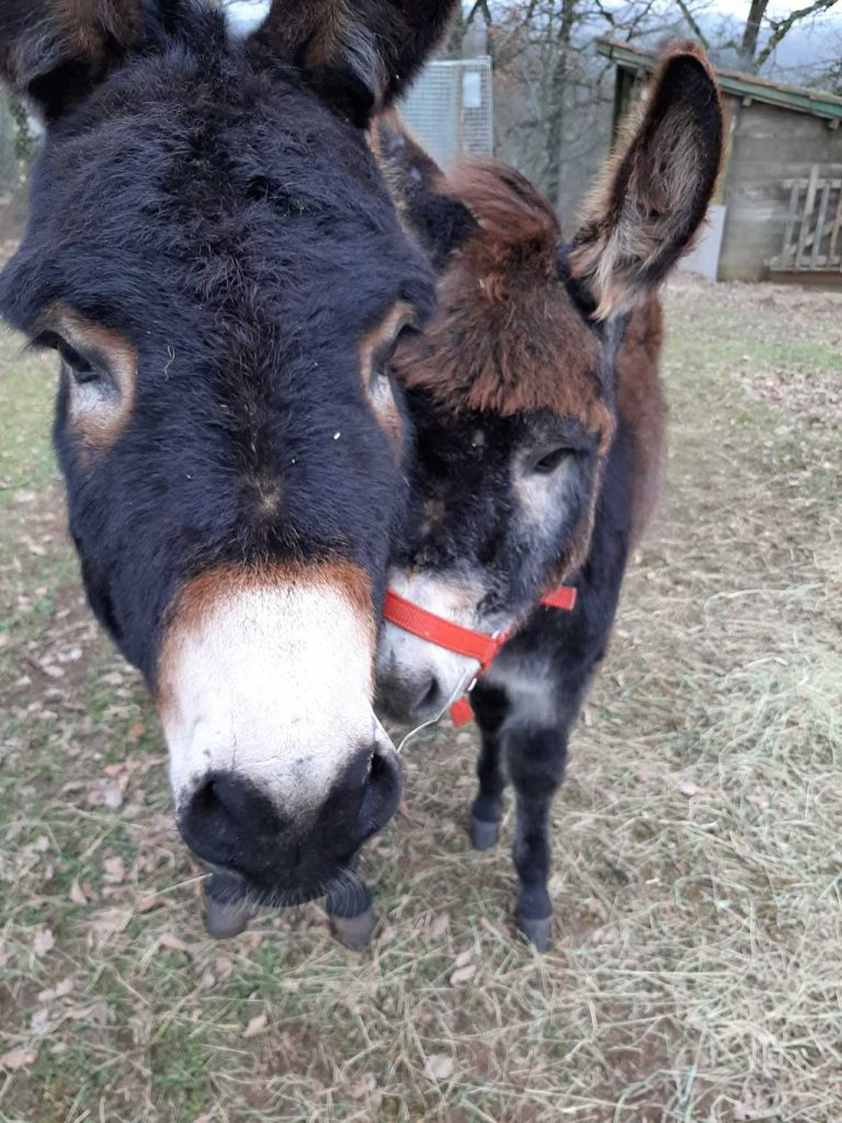Our 2 donkeys